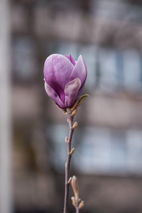 Purple Flower on Brown Stem