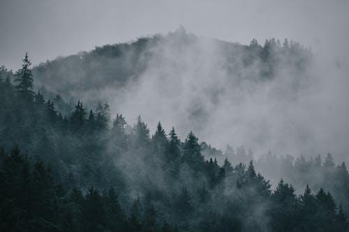 Ingyenes stockfotó eső, fa, füst témában
