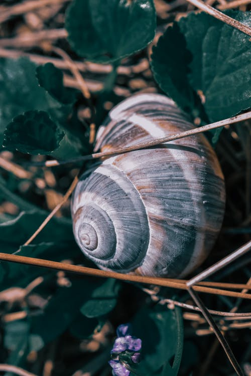 A Brown Snail on Green Leaves