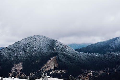 Ingyenes stockfotó domb, fa, festői témában