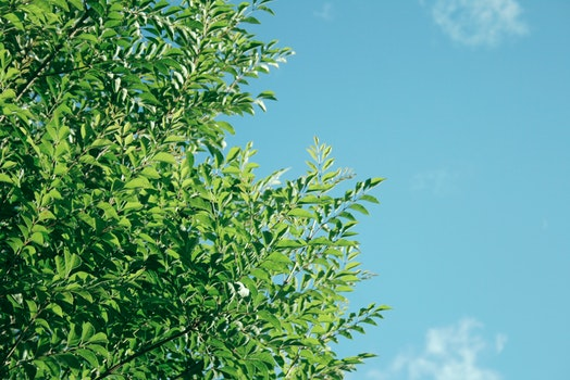 Free stock photo of nature, sky, tree, green