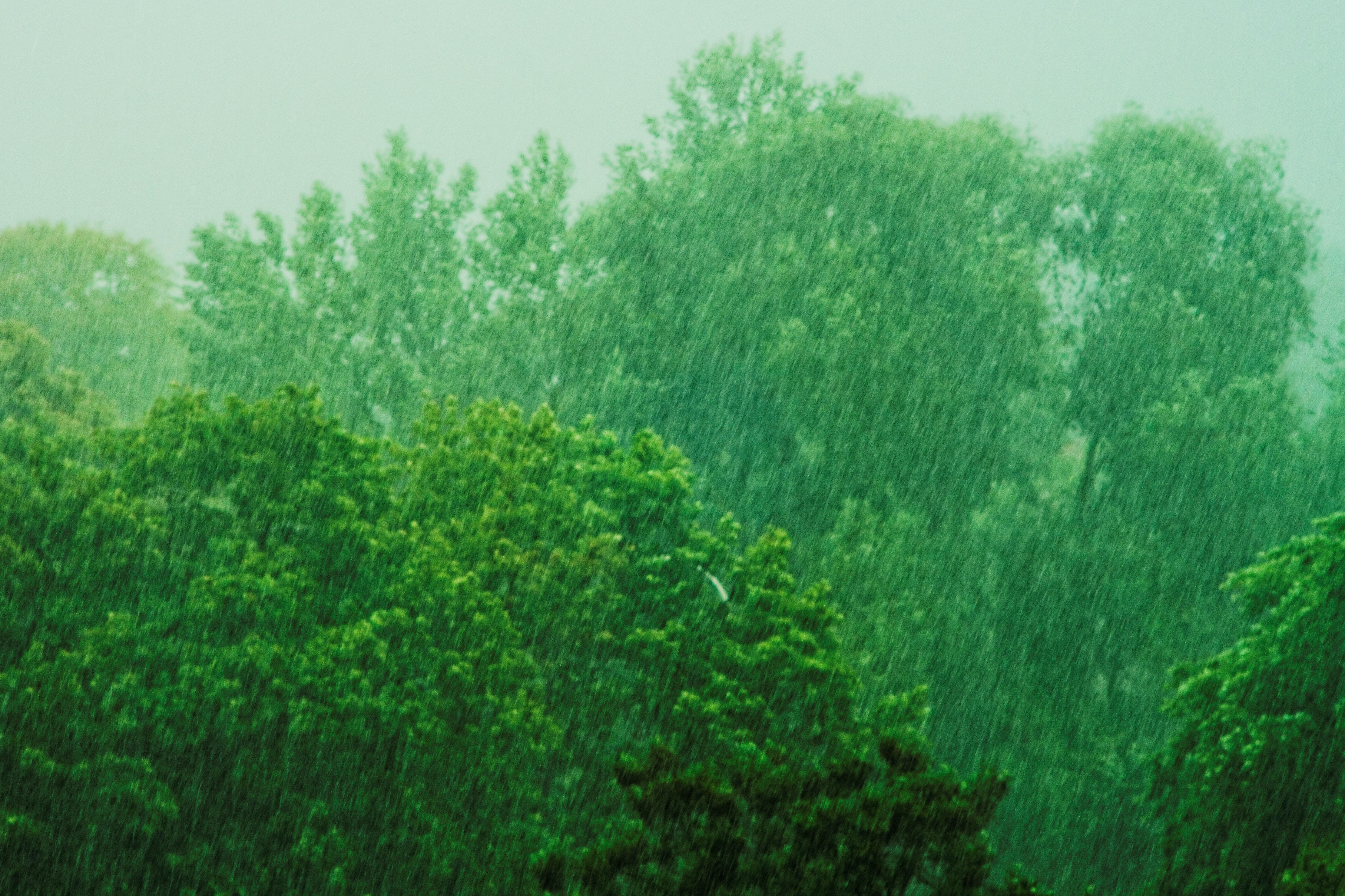 Image result for rain and trees
