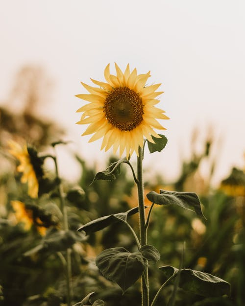 Gratis stockfoto met achtergrond wazig, bladeren, bloeiend
