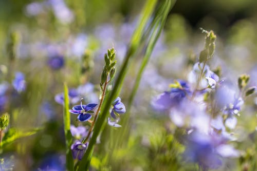 Free stock photo of blooming flowers, close up view, flower meadow