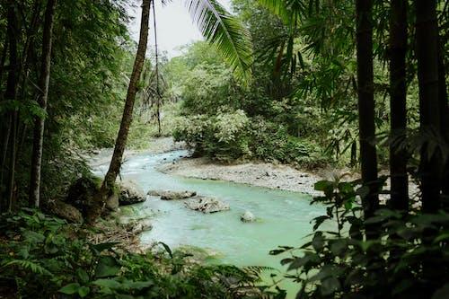 Green Body of Water Between Green Trees