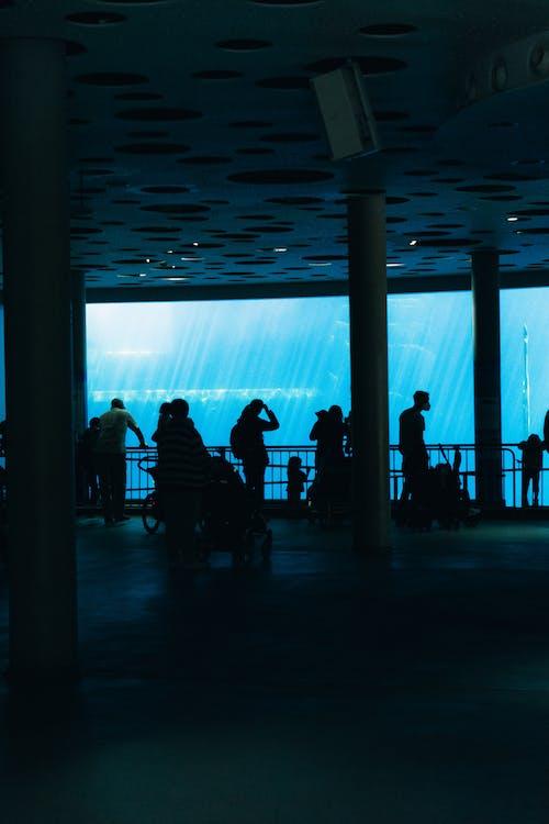 Free stock photo of blue water, dark interior