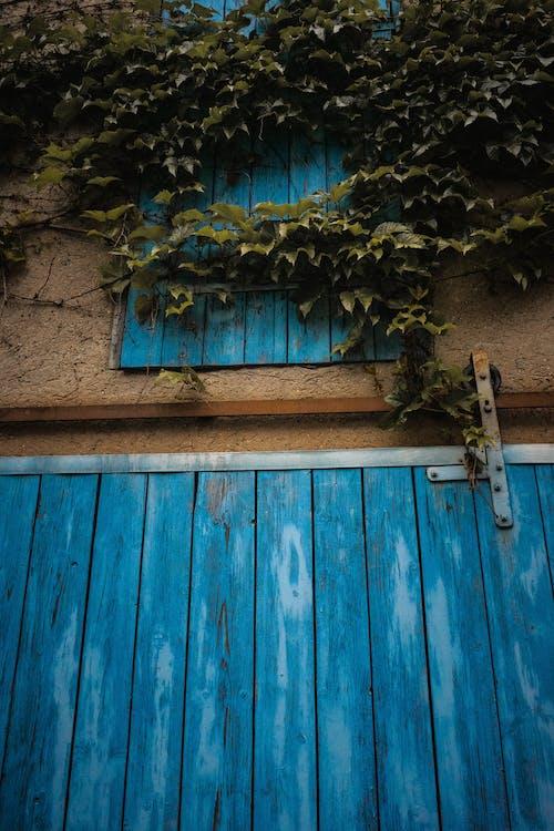 Free stock photo of azure, blue, doors