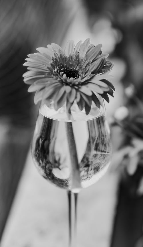 Grayscale Photo of a Flower
