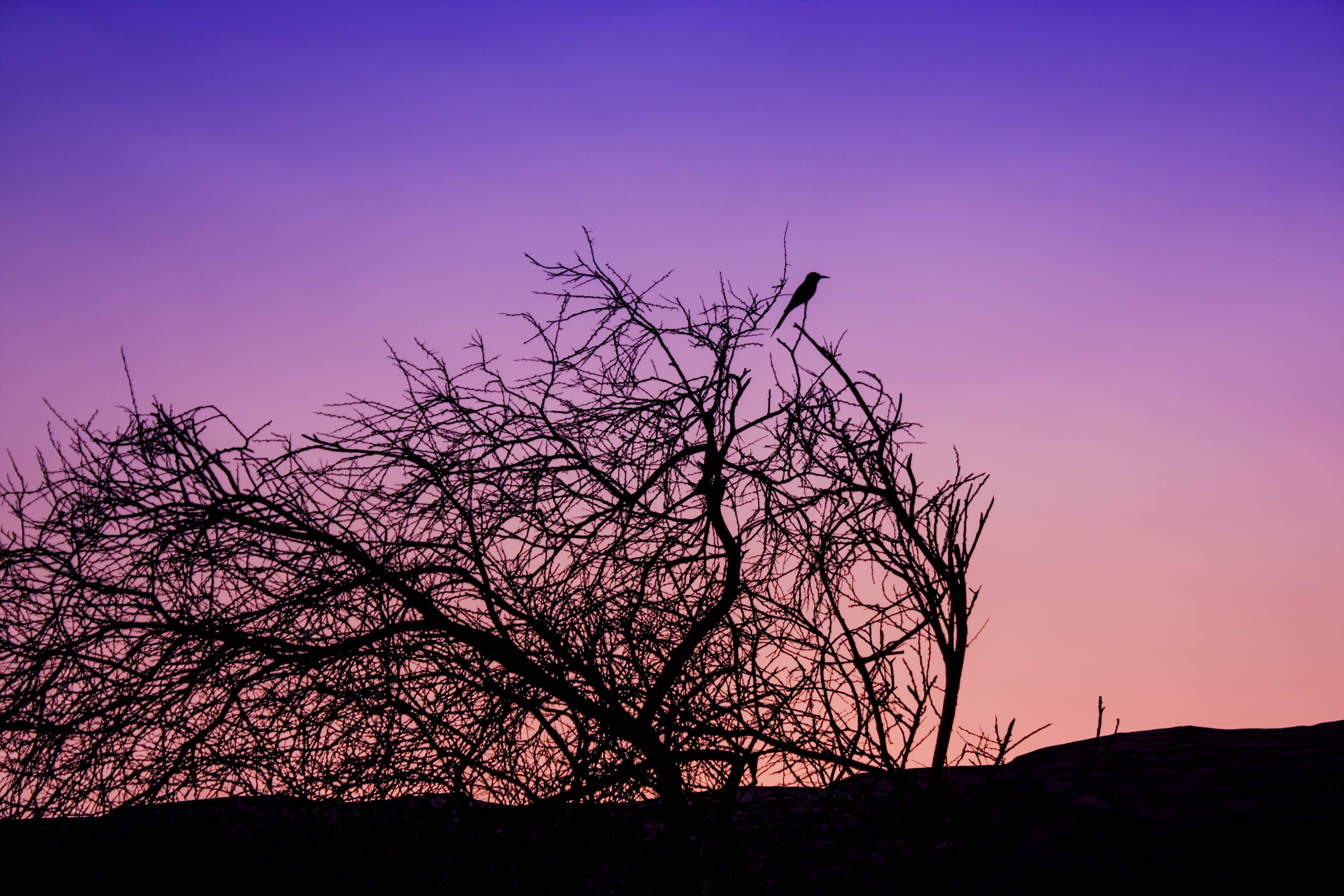 Free stock photo of bird, night, purple, sky
