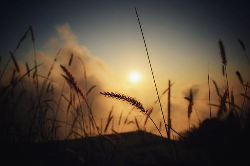 Silhouette of Grass at Twilight