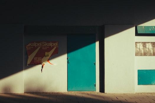 Free stock photo of light, sun, door, color