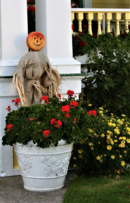 Scarecrow Behind a Plant on White Pot