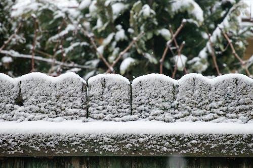 Fotobanka sbezplatnými fotkami na tému biela, zima