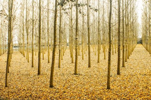Photo of Yellow Tree Stems