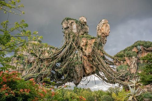 Free stock photo of disney world, nature