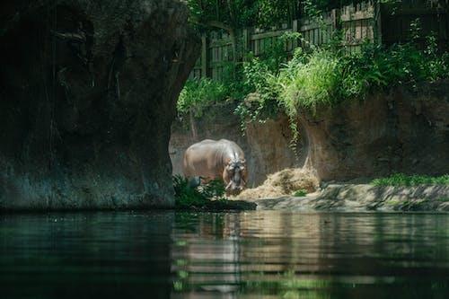 Free stock photo of disney world, dug-out pool, jungle