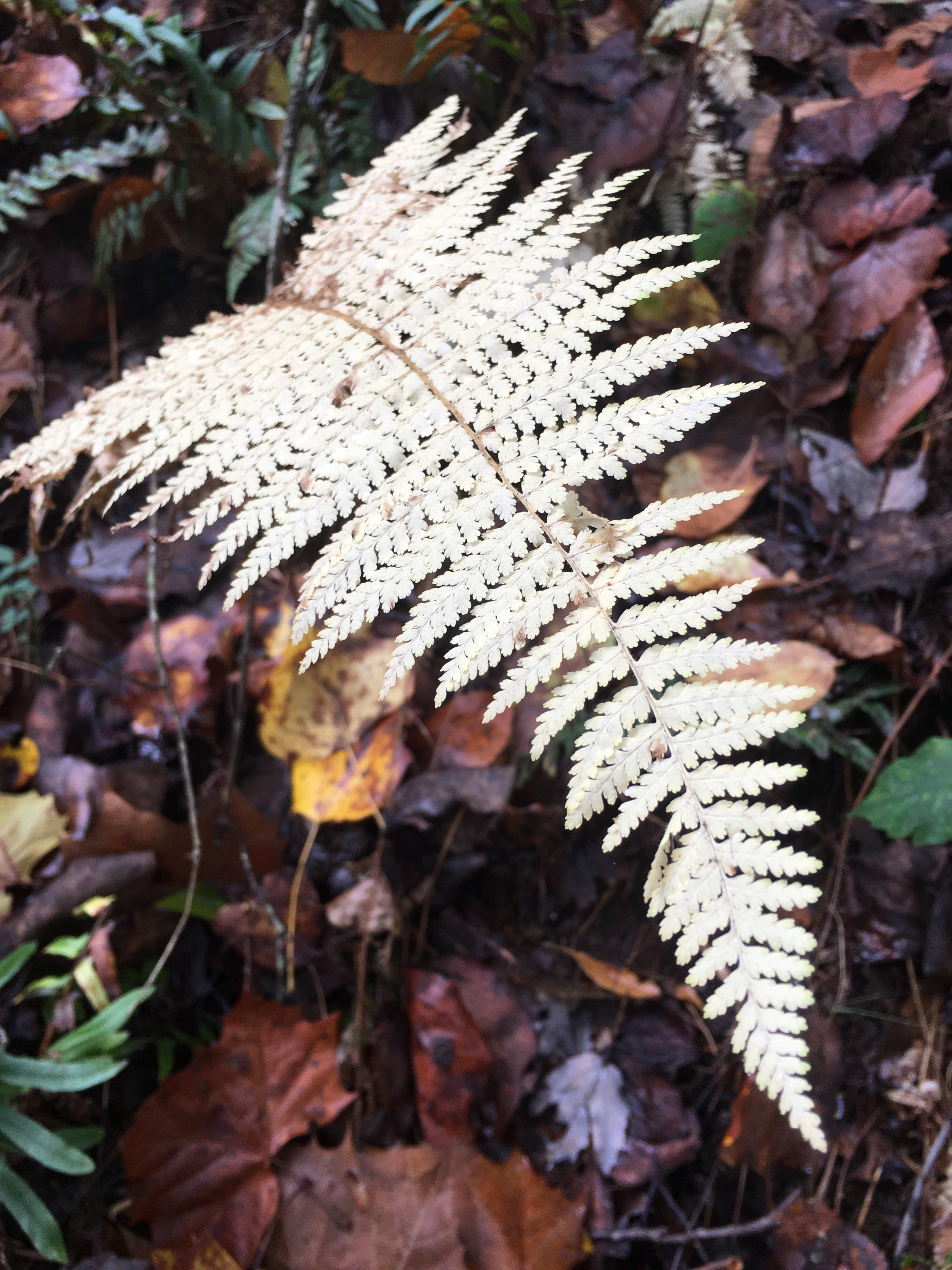 Free stock photo of moody, fallen leaves, white fern