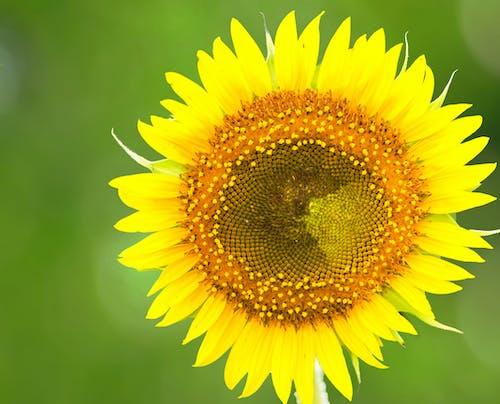 Free stock photo of flowers, macro, nature