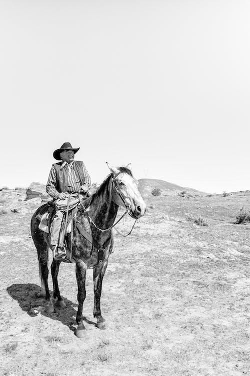 교통체계, 기병, 남자의 무료 스톡 사진