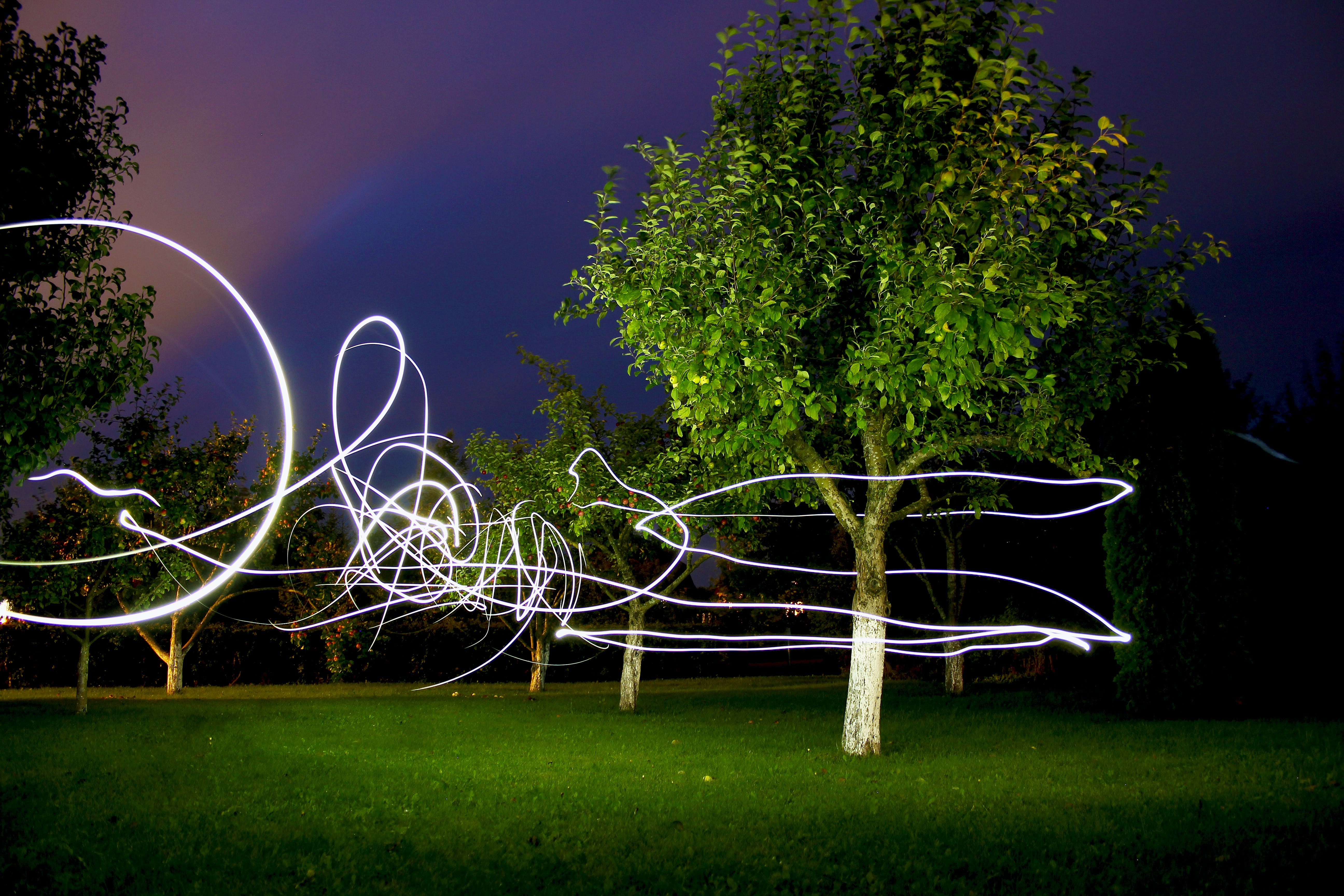 Free stock photo of Dark Sky, light trail, trees