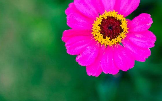 Free stock photo of neon, flower, magenta, fluorescent