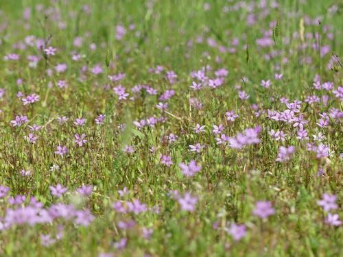 Foto profissional grátis de brotos, flora, floração