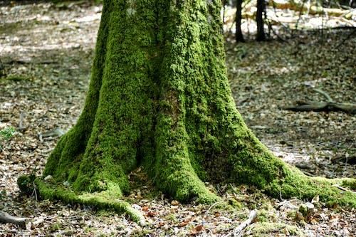 Free stock photo of tree, woods