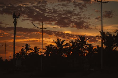 Palm Trees Under Cloudy Sky during Sunset