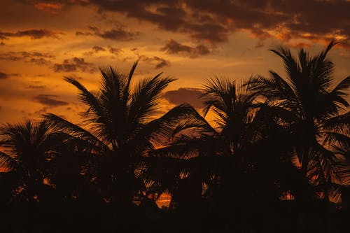 Palm Tree Under Cloudy Sky during Sunset