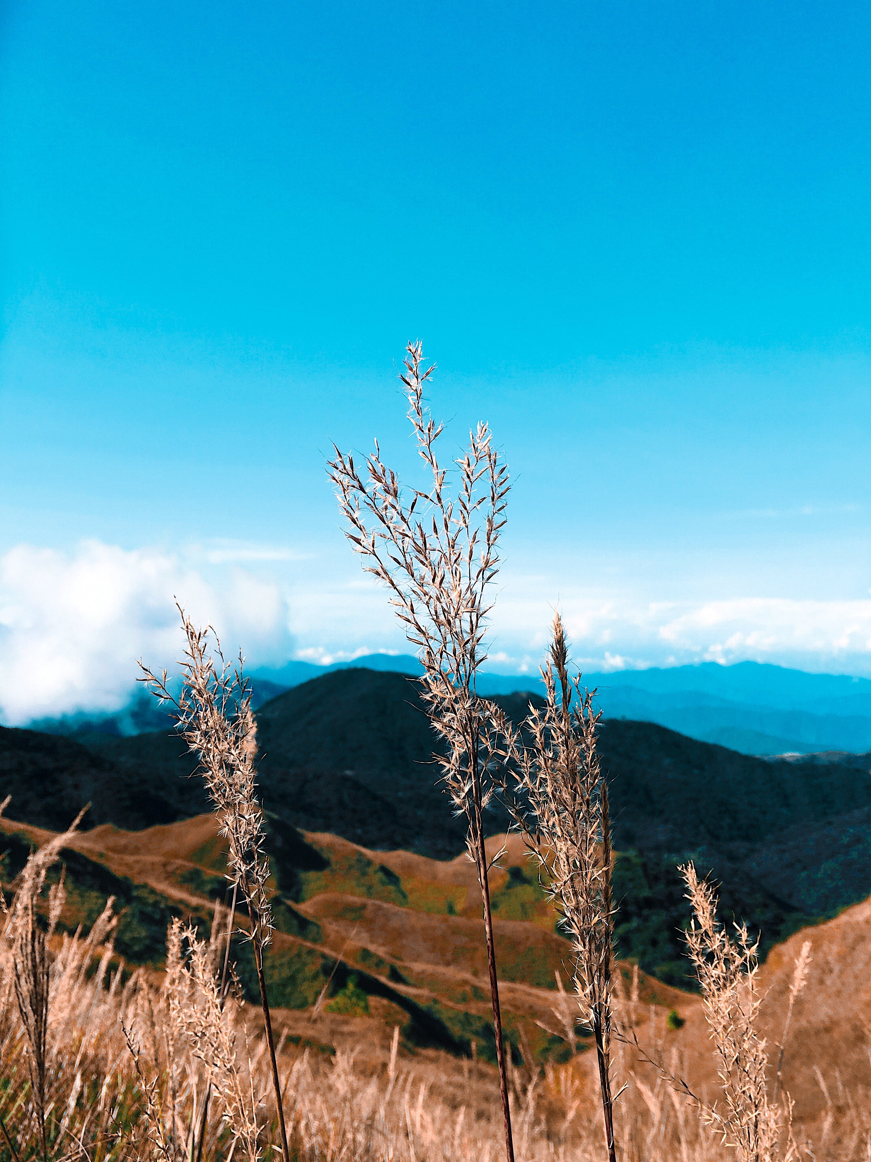 Focus Photo of Brown Plants on Mountain Range