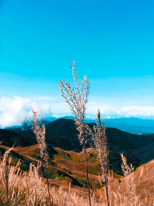Fotos de stock gratuitas de amanecer, brillante, campo, campo de hierba