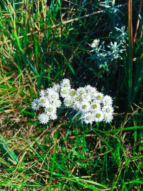 Základová fotografie zdarma na téma Grónsko, krásné květiny, zelené pole