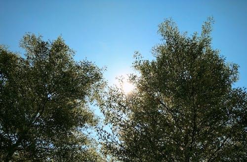 Gratis lagerfoto af sol mellem træer