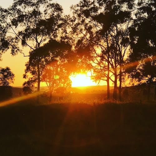 Darmowe zdjęcie z galerii z zachód słońca na drodze