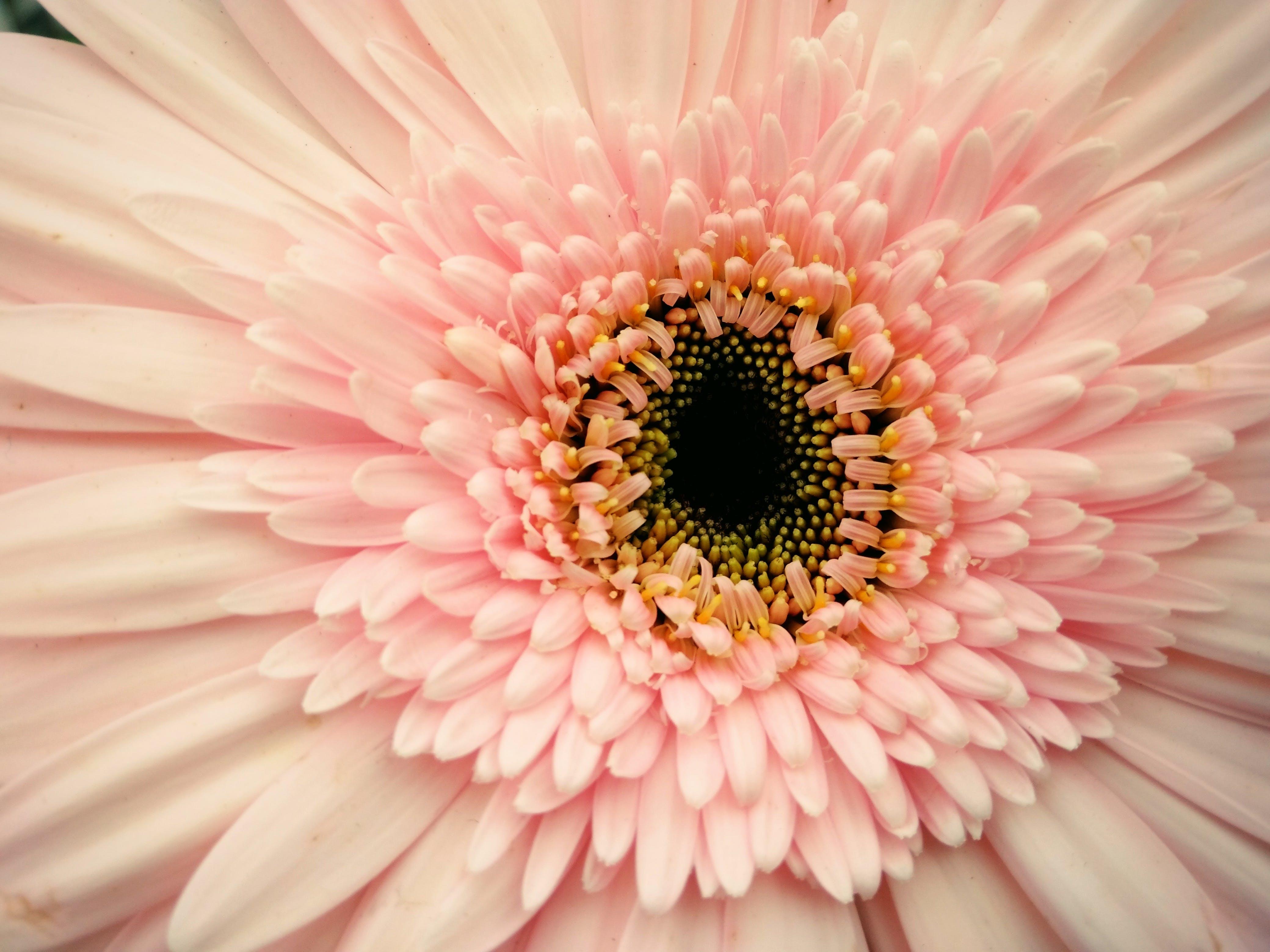 Ilmainen kuvapankkikuva tunnisteilla kasvikunta, kaunis, kukinta, kukka