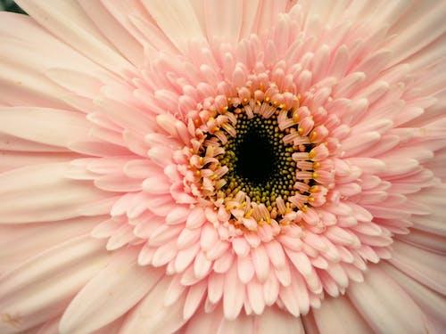 Kostnadsfri bild av blomma, blomning, botanisk, färger