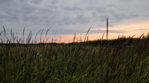 Green Grass Overlooking Sun Set on Horizon