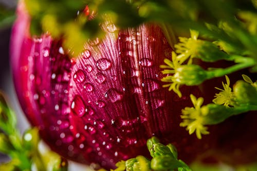 Purple and Green Flower With Water Droplets