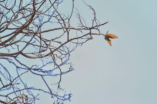 Δωρεάν στοκ φωτογραφιών με κλαδί δέντρου, πράσινο bea τρώγων