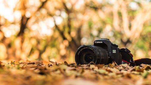 DSLR, 여름 분위기, 카메라, 캐논의 무료 스톡 사진
