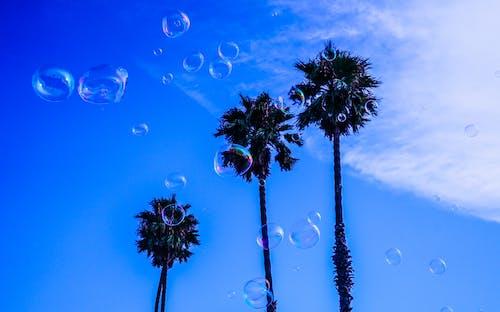Tre Palme Durante La Giornata Nuvolosa Blu E Bianca