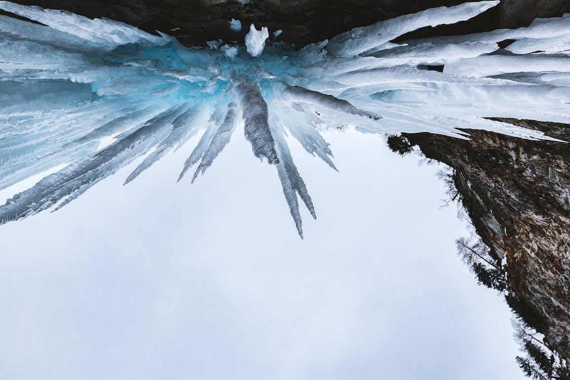 açık, ağaçlar, buz