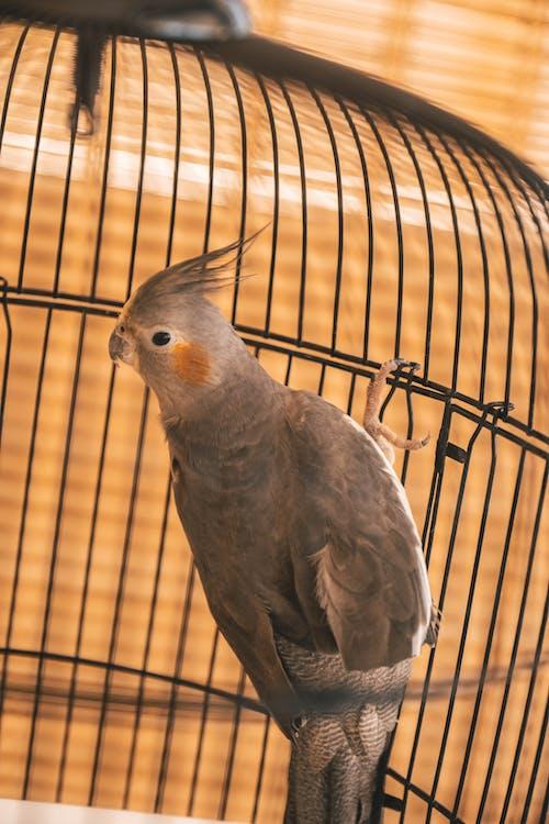 Foto stok gratis Abu-abu, burung, burung abu-abu