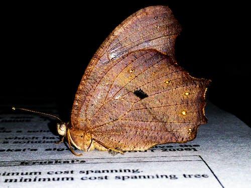 gözler, kanatlar, kapamak, kelebekler içeren Ücretsiz stok fotoğraf