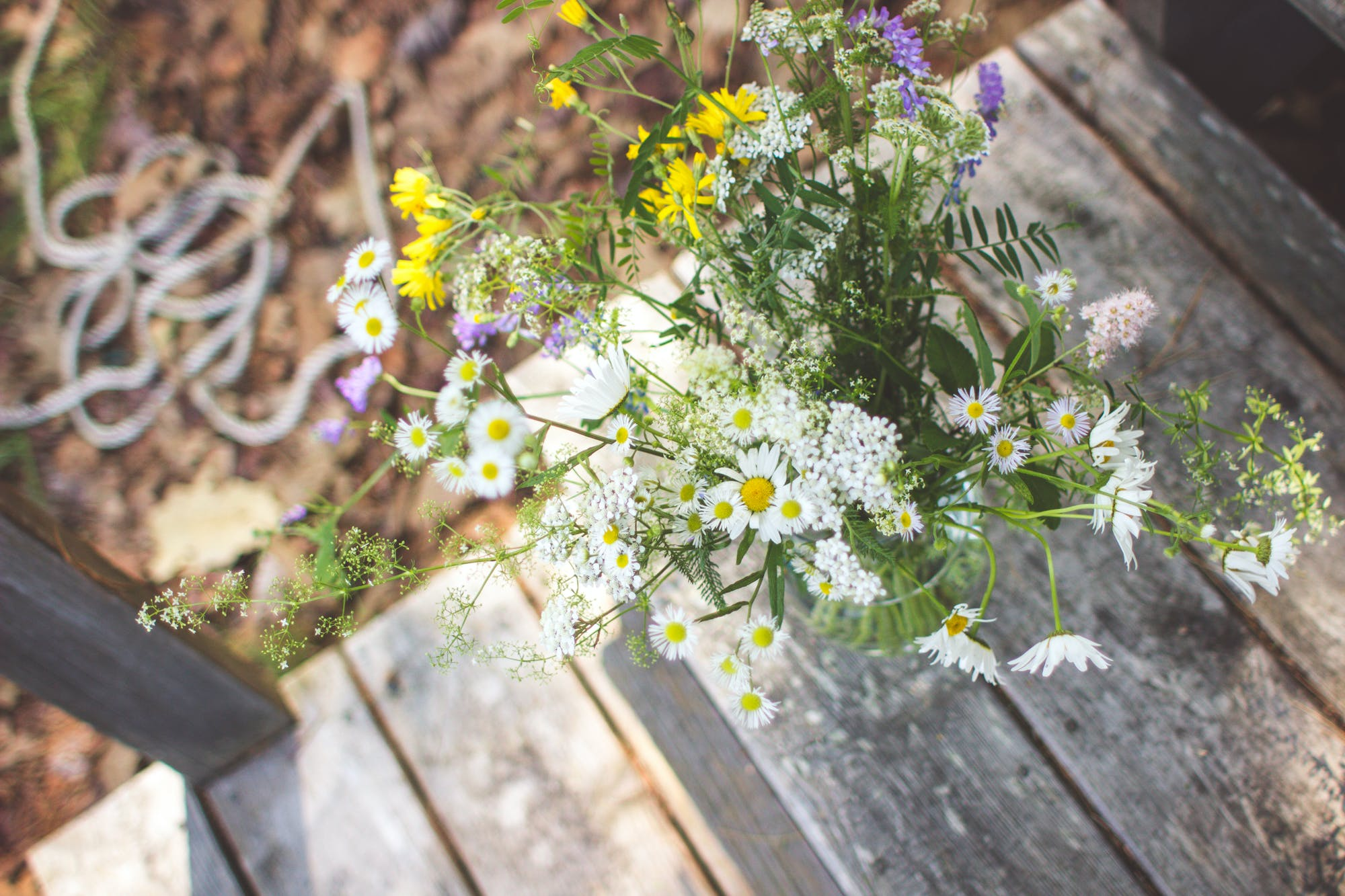 Free stock photo of flowers, summer, green