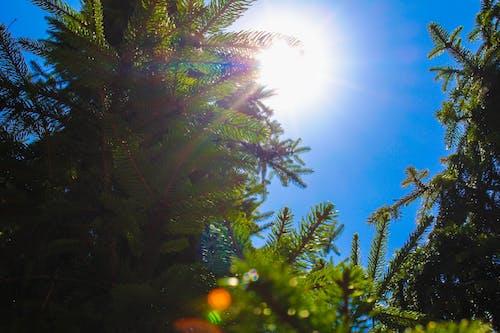 akşam Güneşi, lens flare, yeşil içeren Ücretsiz stok fotoğraf