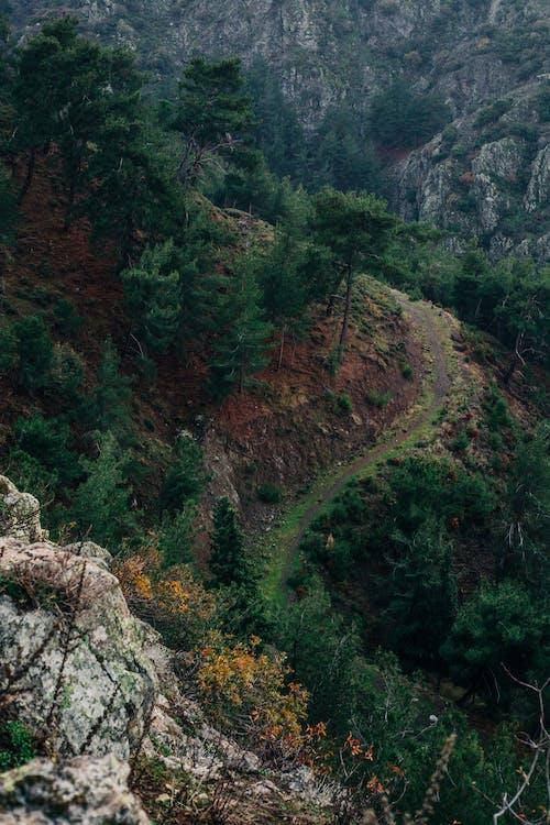 Foto profissional grátis de abismo, arbusto, árvore