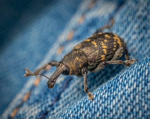Foto d'estoc gratuïta de a l'aire lliure, animal, beetle