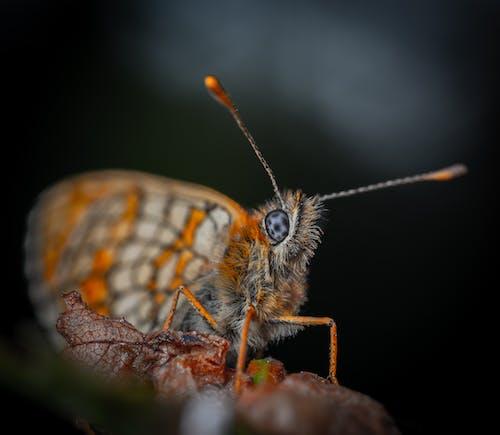 Foto d'estoc gratuïta de a l'aire lliure, abdomen, ala