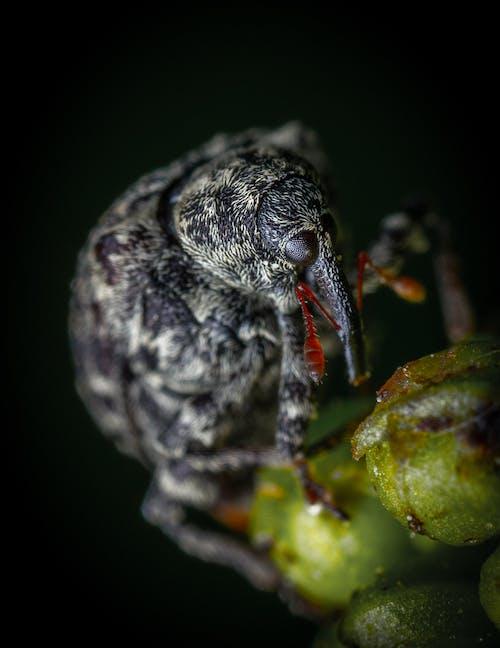 Foto d'estoc gratuïta de a l'aire lliure, animal, aranya